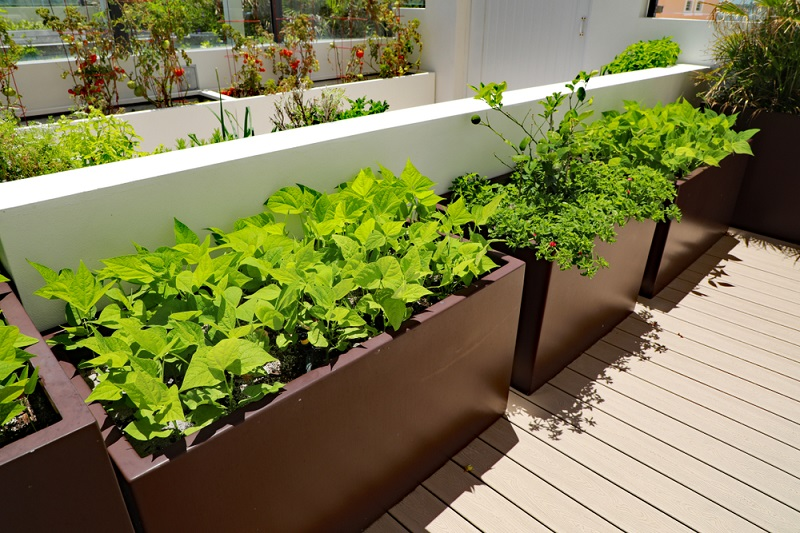 Vegetable Planter Boxes